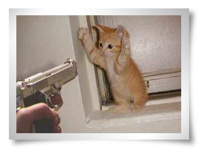 conselho dica roubo o que faze mao armada benfica melhor do mundo